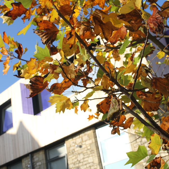 Autumn leaves in foreground, University of Winchester building in background