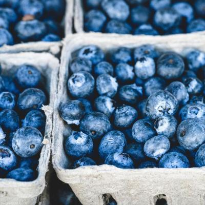 Short courses in plant-based nutrition at the University of Winchester: punnets of blueberries