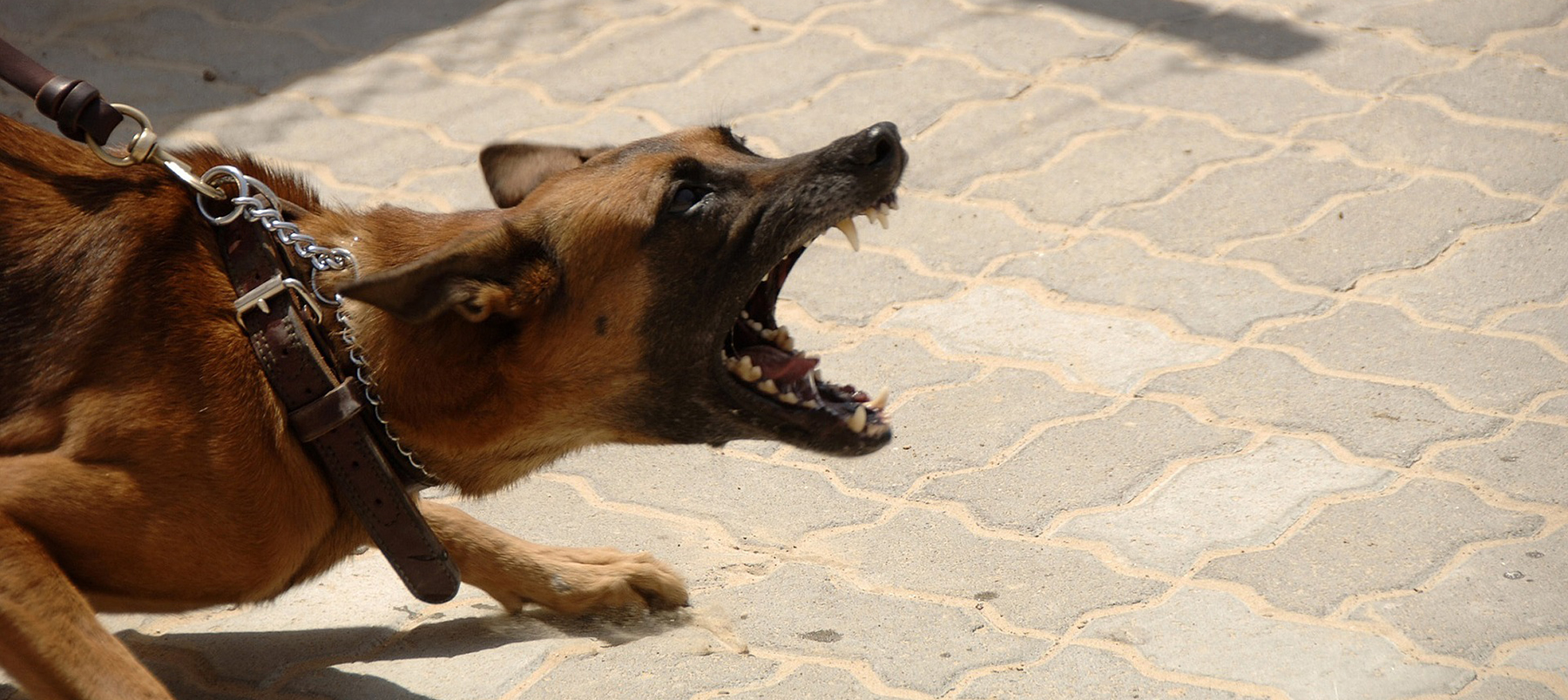 Animal Welfare at Winchester: image of aggressive dog